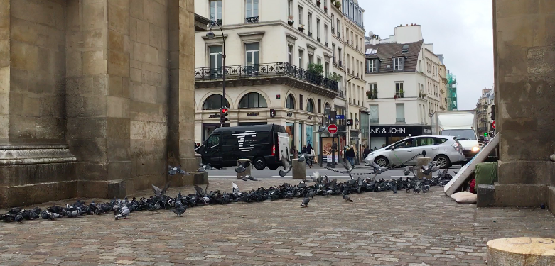 Ligne pigeons